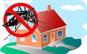 Hasil gambar untuk cara alami ruangan bebas nyamuk