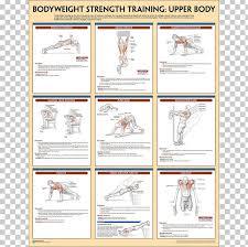 strength anatomy bodyweight exercise weight png clipart area bodywe brand calisthenics exercise free png