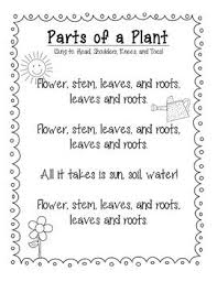 Small Picture Parts of a Flower Song Sung to Head Shoulders Knees and toes