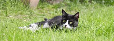 how to keep cats out of gardens rspca