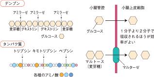 タンパク質 分解 酵素