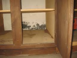 Black Mold In Kitchen Blog Converge Inspections Oklahoma City Tulsa Home Inspections
