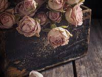 простые цветы: лучшие изображения (396) | Простые цветы ...