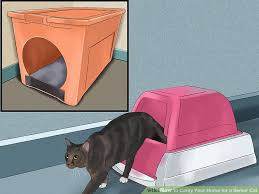 senior cat litter box. Wonderful Litter Image Titled Catify Your Home For A Senior Cat Step 11 To Litter Box T