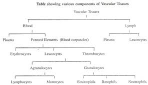Valid Bone Tissue Structure And Function Flow Chart 1 The