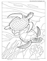 Turtle Coloring Sheet Trustbanksurinamecom