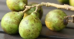 Jamaican National Fruit  YouTubeJamaican Fruit Trees