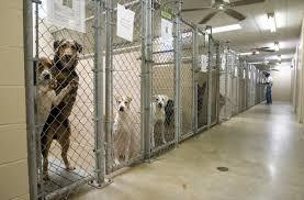animal shelters sad. Unique Sad I  Throughout Animal Shelters Sad