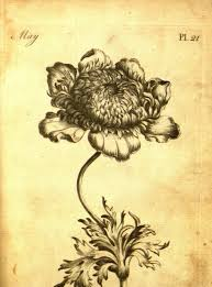 it was fun for me to read instructions for botanical drawing technique like the concept of light source explained in the age of the 18th century