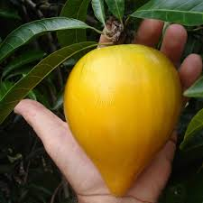 Five Great Fruit Trees For Southern California Yards  Evergreen Southern California Fruit Trees