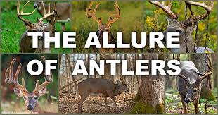 Deer Movement Chart Ms Mdwfp Mississippi Outdoors The Allure Of Antlers