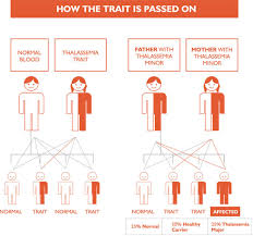 What Is Thalassemia Health Codify Club