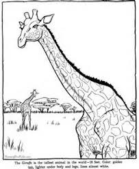 Small Picture Free Printable Zoo Animal Coloring Pages Coloring Page Zoo