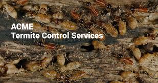 acme pest control. Simple Control Pest Control Chennai  In Acme P