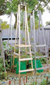 if you need a tomato cage that will serve its purpose during the summer and be easy to during the winter months then this is it