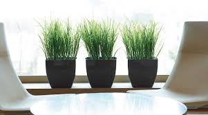 interior office plants. the air purifying benefits of indoor plants interior office c
