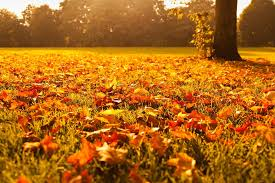 Image result for fall