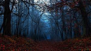Fall Forest HD Wallpapers (Page 5 ...