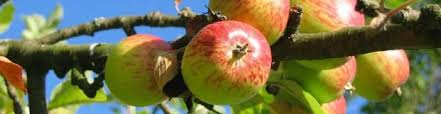 How To Spray Fruit Trees With Dormant Oil  HunkerDormant Fruit Trees