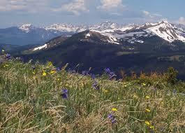 File:Alpine tundra Copper Mountain Colorado.jpg - Wikimedia Commons