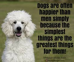 Quotes About Dogs And Friendship Simple 48 Dog Quotes For People Who Love Dogs SayingImages