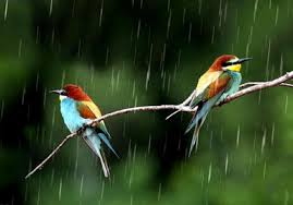 beautiful rainy seasons wallpapers
