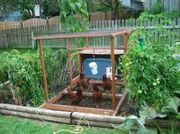 Small Picture Good Backyard Vegetable Garden Garden Ideas Best Ideas