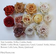 brown rose color study with mayesh