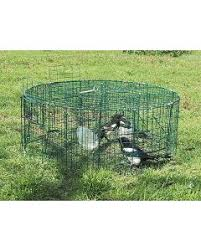 magpie trap magpie pigeon and raven