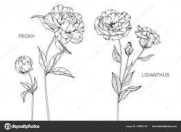 牡丹とトルコギキョウの花図面と黒と白の線画でスケッチ ストック