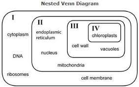 Compare Prokaryotic And Eukaryotic Cells Venn Diagram Refer To The Nested Venn Diagram Above Identify The Venn