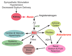 Ace Conversion Chart Cv Pharmacology Angiotensin Converting Enzyme Ace Inhibitors