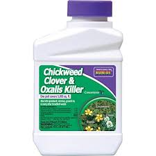 oxalis weed killer. Modren Weed Bonide Chemical Chickweed Clover And Oxalis Killer To Weed