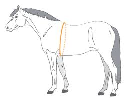 Measure A Horses Height Weight Allpony
