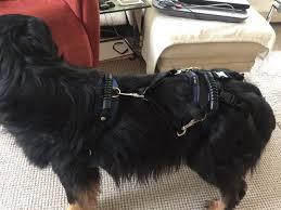 598 angebote zu hund tragehilfe im hundezubehör preisvergleich. Das Carelift Tragegeschirr Ist Eine Gehhilfe Fur Gelahmte Hunde