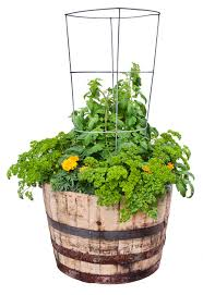 parsley tomato container garden