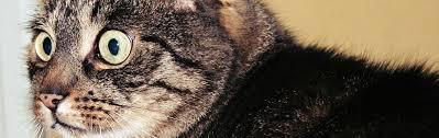 Katzensprüche Witzige Wundervolle Schnurr Poesie