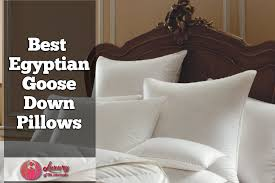 best goose down pillows. Contemporary Best Best Egyptian Cotton Goose Down Pillows In E