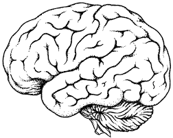 Small Picture Human Brain Coloring Pages Images Of Photo Albums Anatomy Within