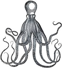 Small Picture Best 20 Octopus images ideas on Pinterest Cute doodles Big