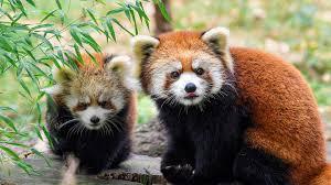zoo. Modren Zoo With Zoo