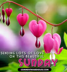 Sunday Beautiful Quotes Best Of Sending Love On This Beautiful Sunday Heart Blossoms Comments
