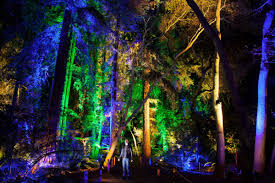 Descanso Enchanted Forest Of Lights Dolas Holiday Light Tour Holiday Forest Garden Lights