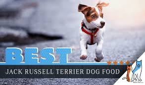 Canidae Dog Food Feeding Chart 15 Best Dog Foods For Jack Russell Terrier Our 2019 Feeding