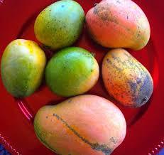 jamaican fruits mango