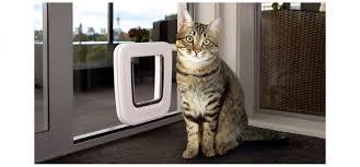 tran white cat door