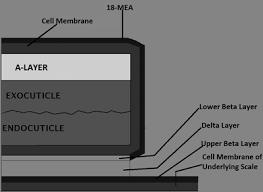delta saw 28 640 wiring diagram wiring diagram data delta saw 28 640 wiring diagram wiring diagram libraries delta wiring schematic delta saw 28 640