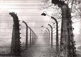 barbed wire fence holocaust. Wonderful Holocaust Auschwitz Poland Postwar Barbed Wire Fences In The Camp Inside Barbed Wire Fence Holocaust