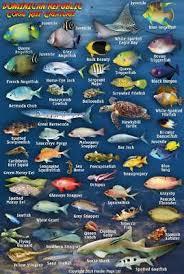 Baja Pacific Coast Sea Of Cortez Waterproof Fish