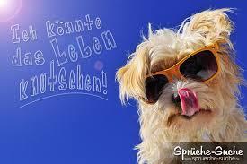 Lebensfroher Spruch Hund Mit Sonnenbrille Sprüche Suche